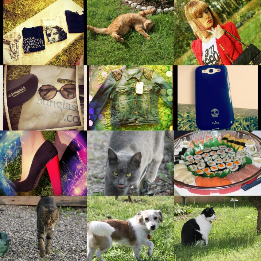 alessia milanese,thechilicool,fashion blog,fashion blogger, cats, pets. samsung galaxy S3