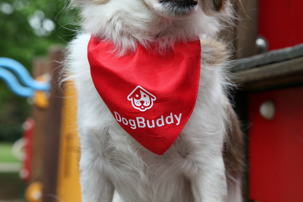 #DogBuddy: dog sitter è fashion!, alessia milanese, thechilicool, fashion blog, fashion blogger